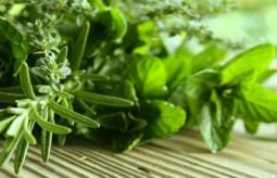 Zdrowie zaklęte w ziołach - Stefania Korżawska o ziołach