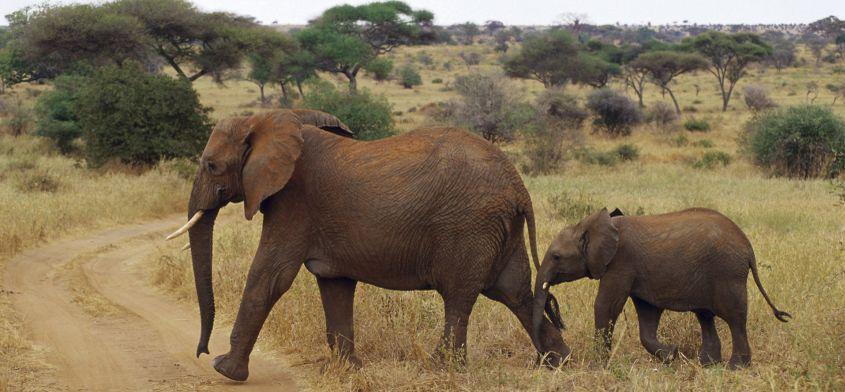 Jak szanować prawa zwierząt podczas podróży
