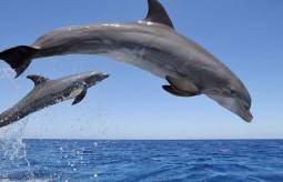 Zatoka delfinów. Niewola w kolorze błękitu