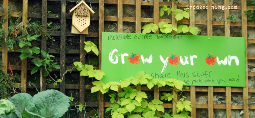 Farmy miejskie - warzywa i owoce dosłownie w zasięgu ręki...