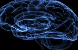 Fascynujący mózg! Światowy tydzień mózgu 11 marzec - 17 marzec 2013