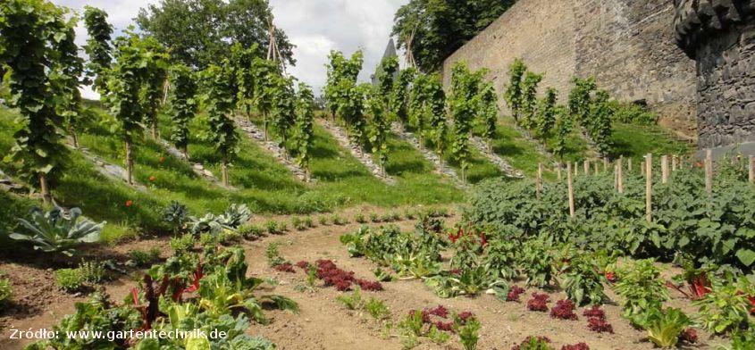 Jadalne miasto Andernach w Niemczech - warzywa i owoce dostępne dla każdego