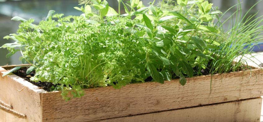 Leczenie ziołami - poznaj przydatne zioła na popularne dolegliwości