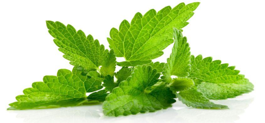 Mięta - orzeźwiające zioło na upalne dni