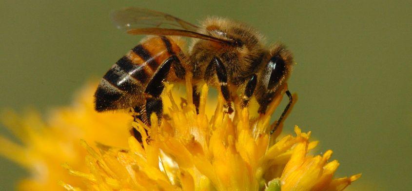 Pasieka na dachu - pomysł na zwiększenie ilości pszczół?