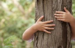Drzewa lecznicze - wykorzystaj uzdrawiającą siłę drzew