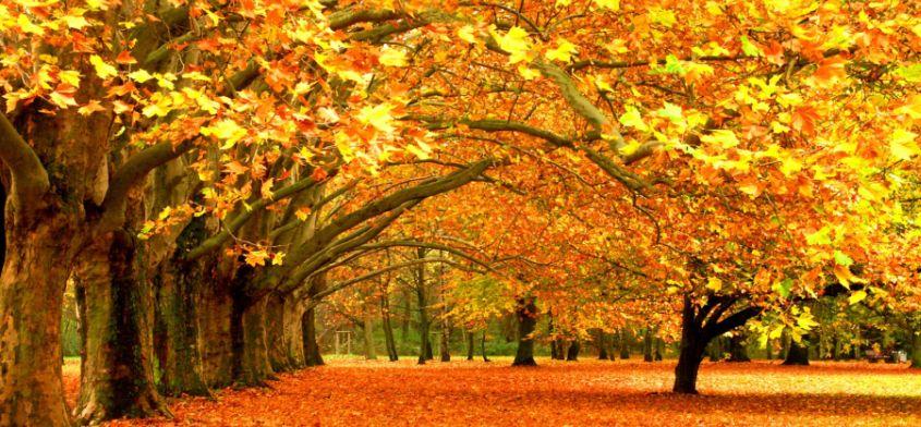 Jesień według Pięciu Przemian