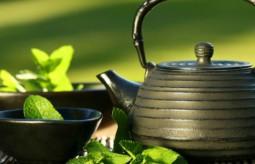 Oto najstarsza ze wszystkich herbat!