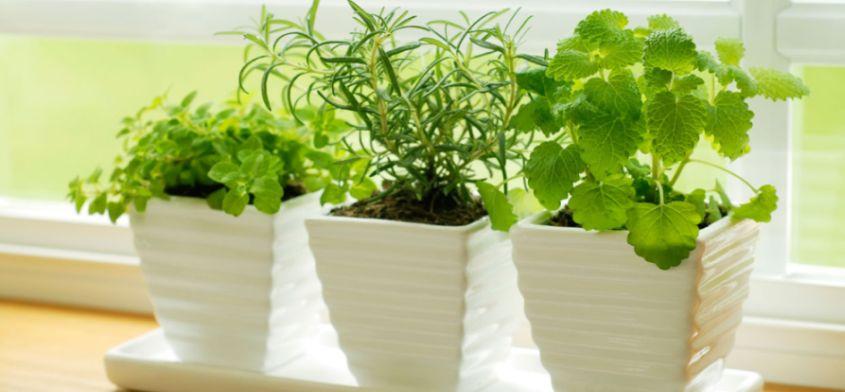 Sprawdź jakie zioła i warzywa możesz wyhodować na balkonie