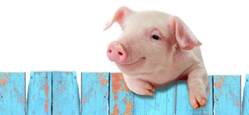 Mięso usunięte z listy produktów rekomendowanych w zdrowej diecie