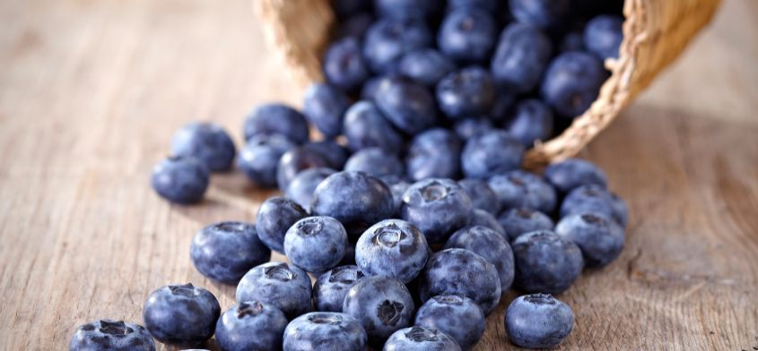 Borówki - poznaj właściwości tych niezwykłych owoców