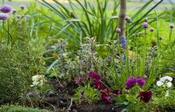 5 zasad zbierania dzikich roślin jadalnych