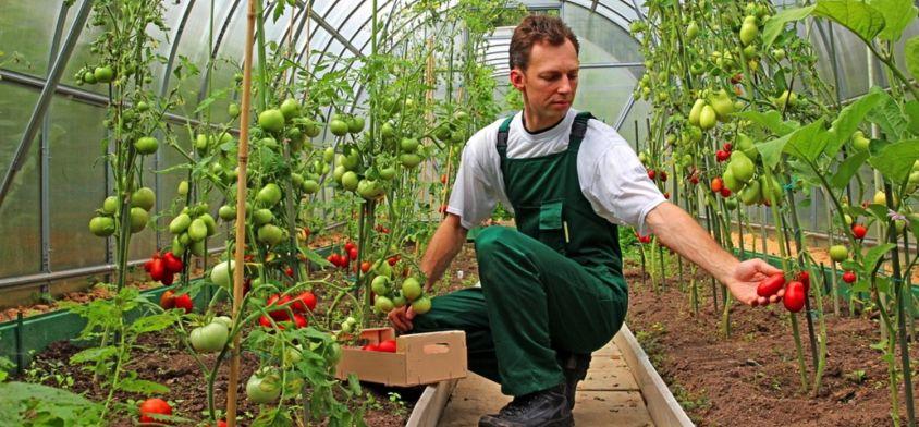 Żywność prosto od rolnika? Teraz tak!