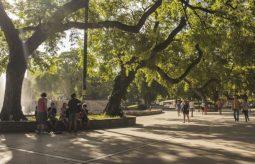 Po co nam drzewa w mieście?