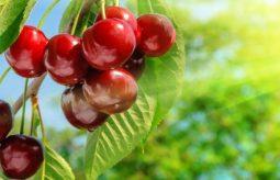 """6 wskazówek jak """"wycisnąć"""" z warzyw i owoców to, co najlepsze"""