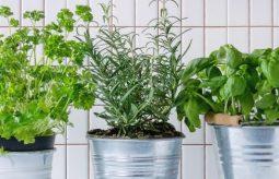 Zimowy ogródek w domu – jak go założyć i pielęgnować?