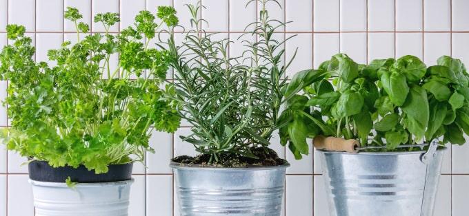 Zimowy ogródek w domu - jak go założyć i pielęgnować?
