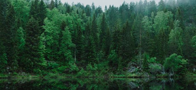Lecznicze działanie spacerów po lesie iglastym