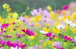 Co warto zrobić na wiosnę? Lista rzeczy - porządki w domu, ogrodzie, organizmie i głowie