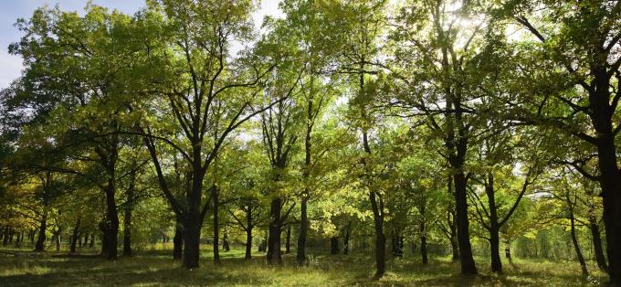 Dendroterapia. Jak przeprowadzić sesję czerpania energii z drzew?