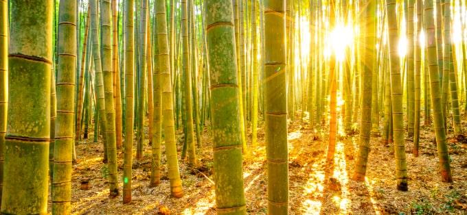 Bambus - właściwości zdrowotne i kosmetyczne