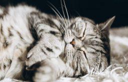 Felinoterapia – o uzdrawiającej mocy kotów