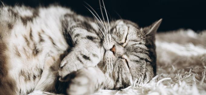 Felinoterapia - o uzdrawiającej mocy kotów