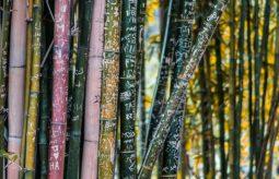 Bielizna bambusowa – dlaczego warto się nią zainteresować?