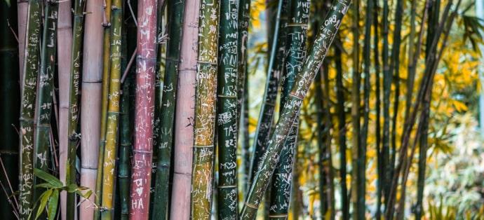 Bielizna bambusowa - dlaczego warto się nią zainteresować?